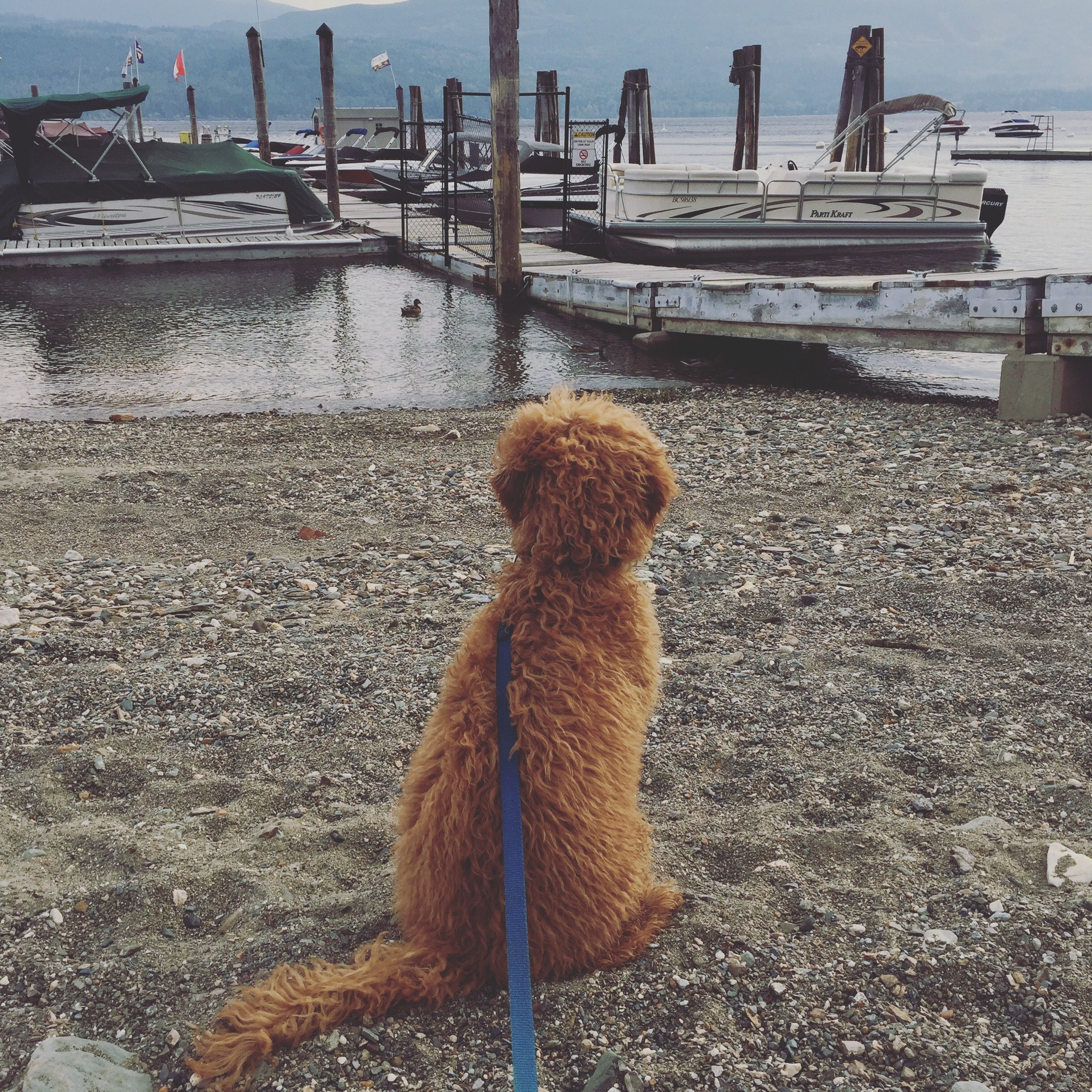 Our little puppy at the boat dock