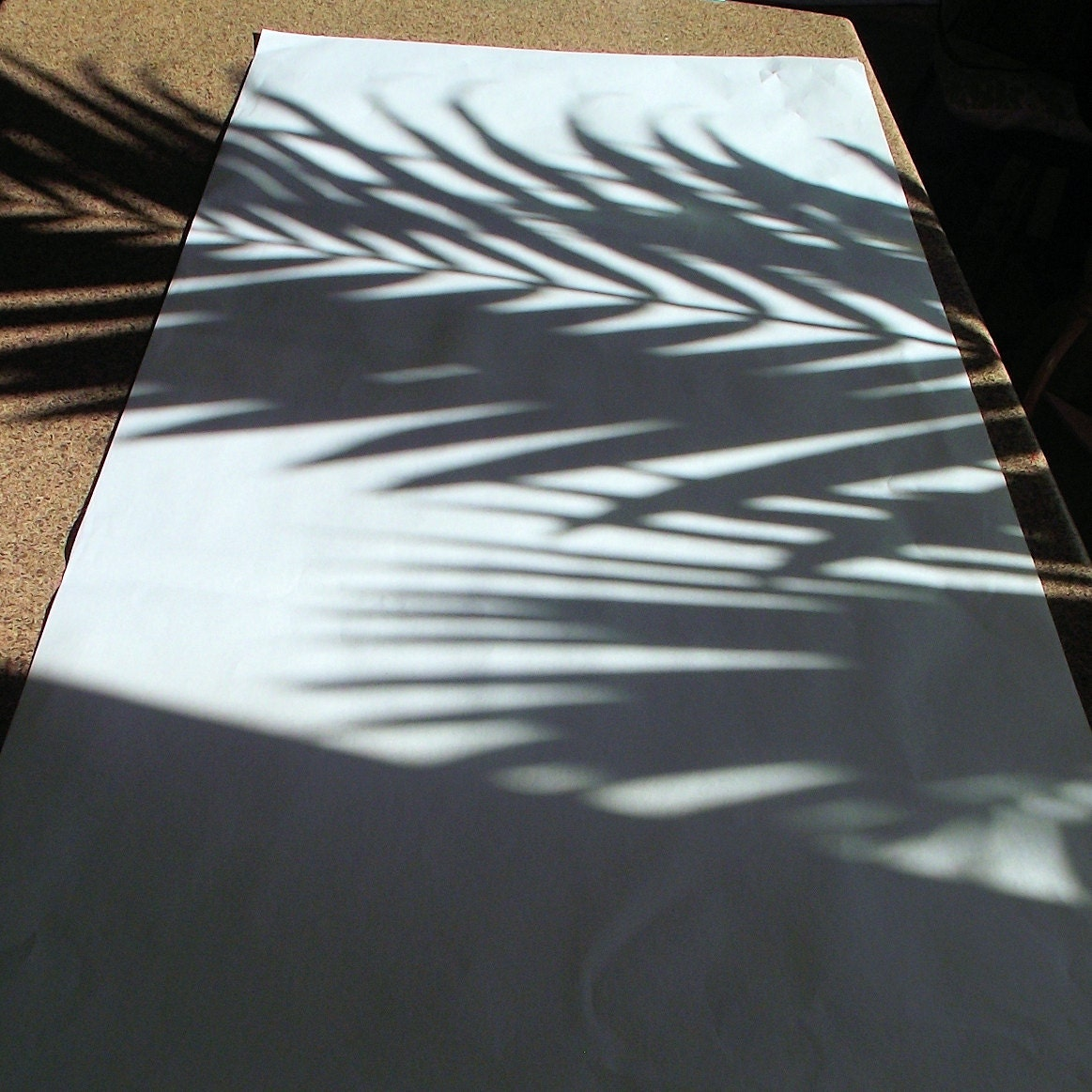 Palm shadow on the paper