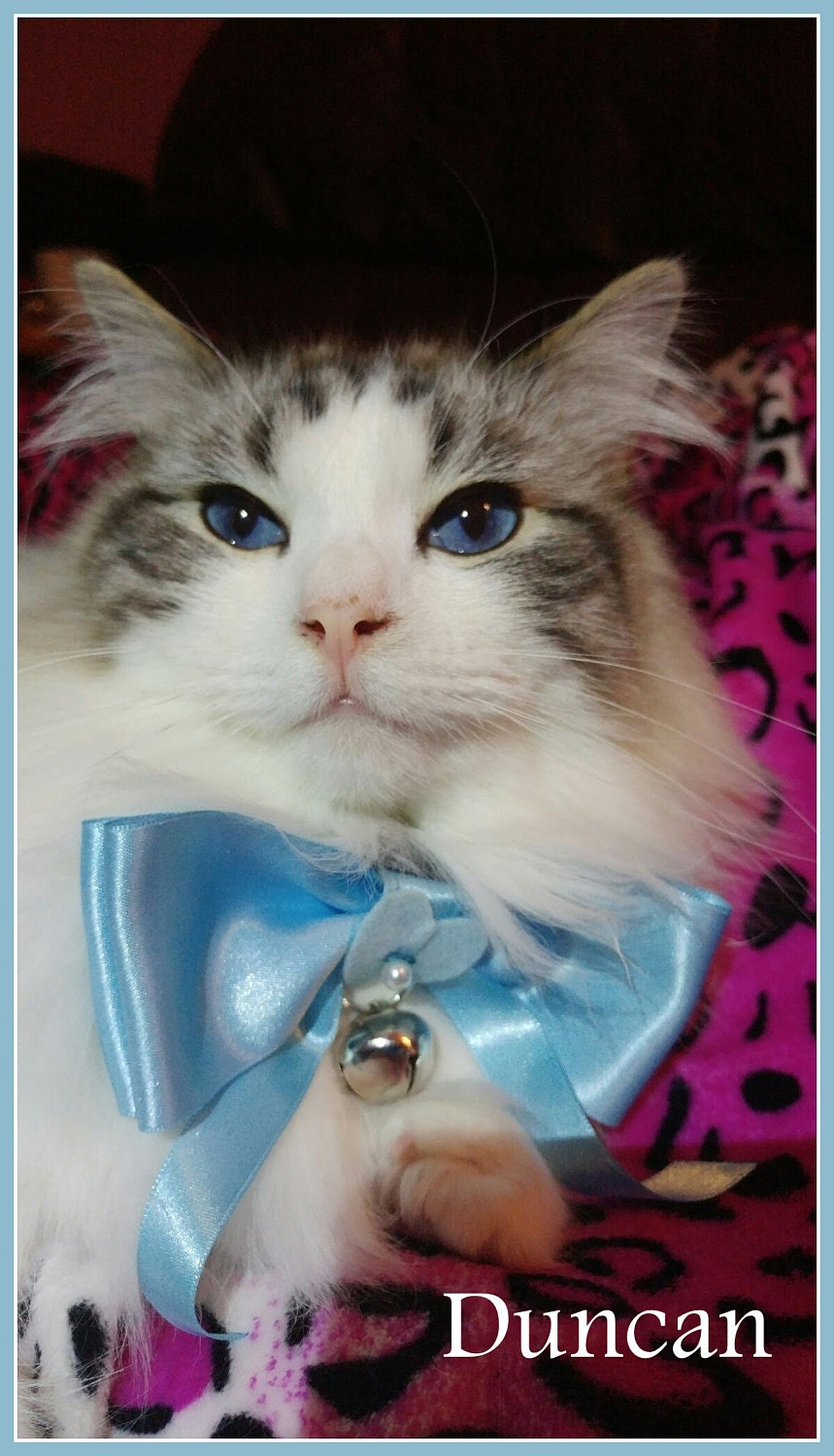 Duncan wearing his satin blue bow tie