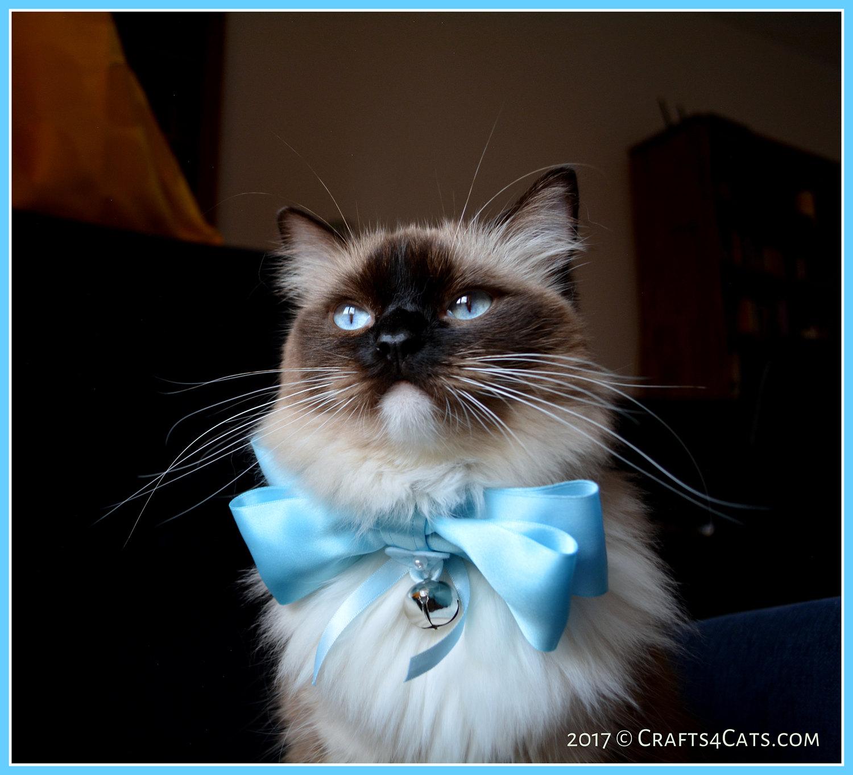 Luxury cat bow tie