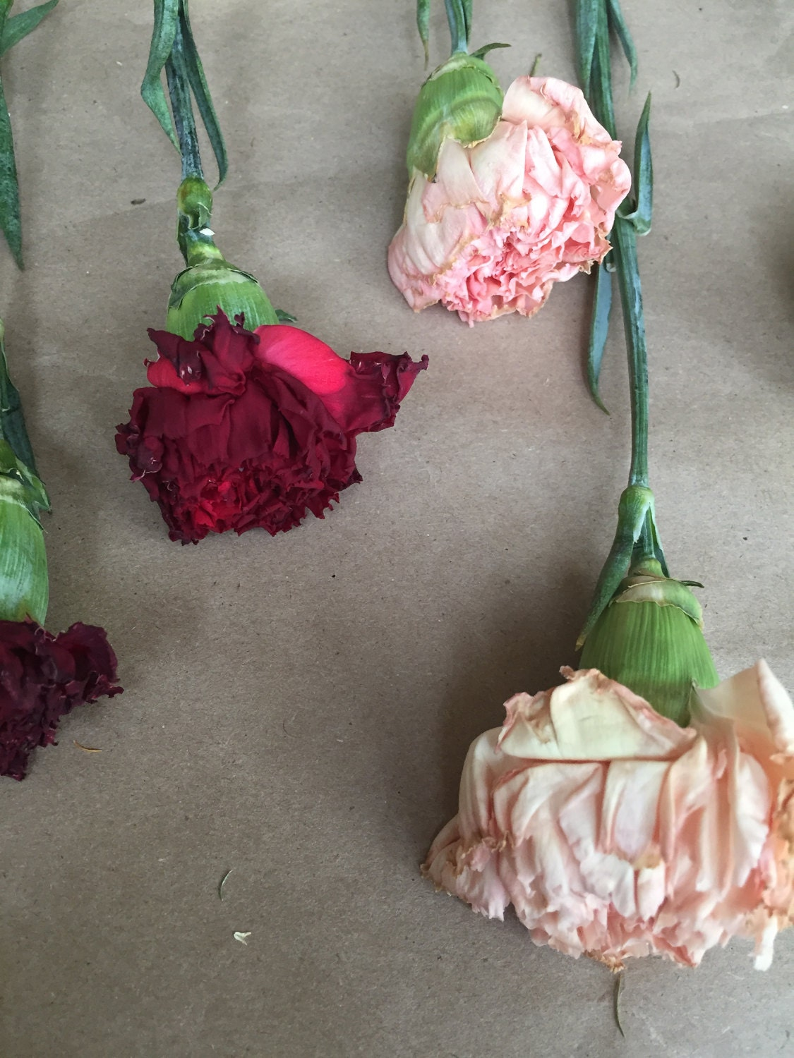Partially Dried Carnation Flowers