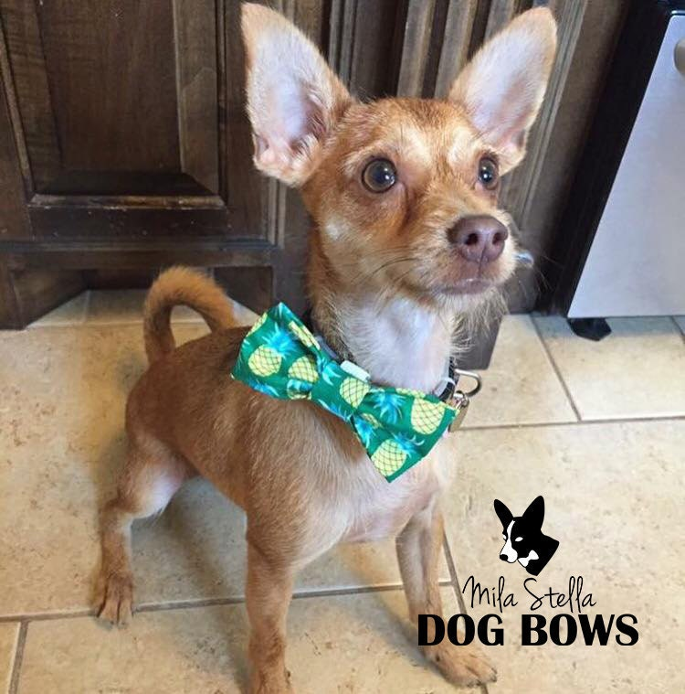 Pineapple dog bow