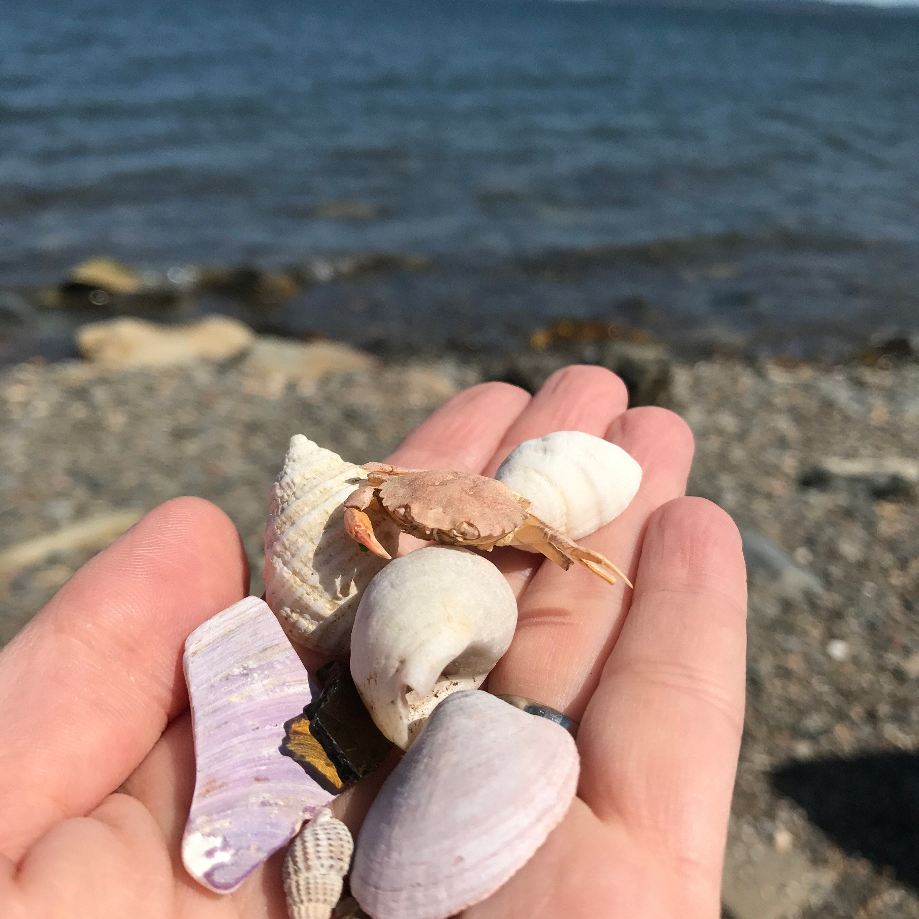 Beach treasures gathered in Digby, Nova Scotia