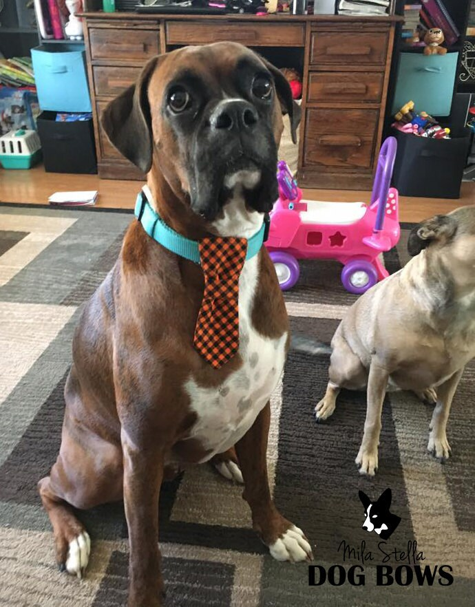 dog neckties