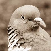 PigeonPointRustics