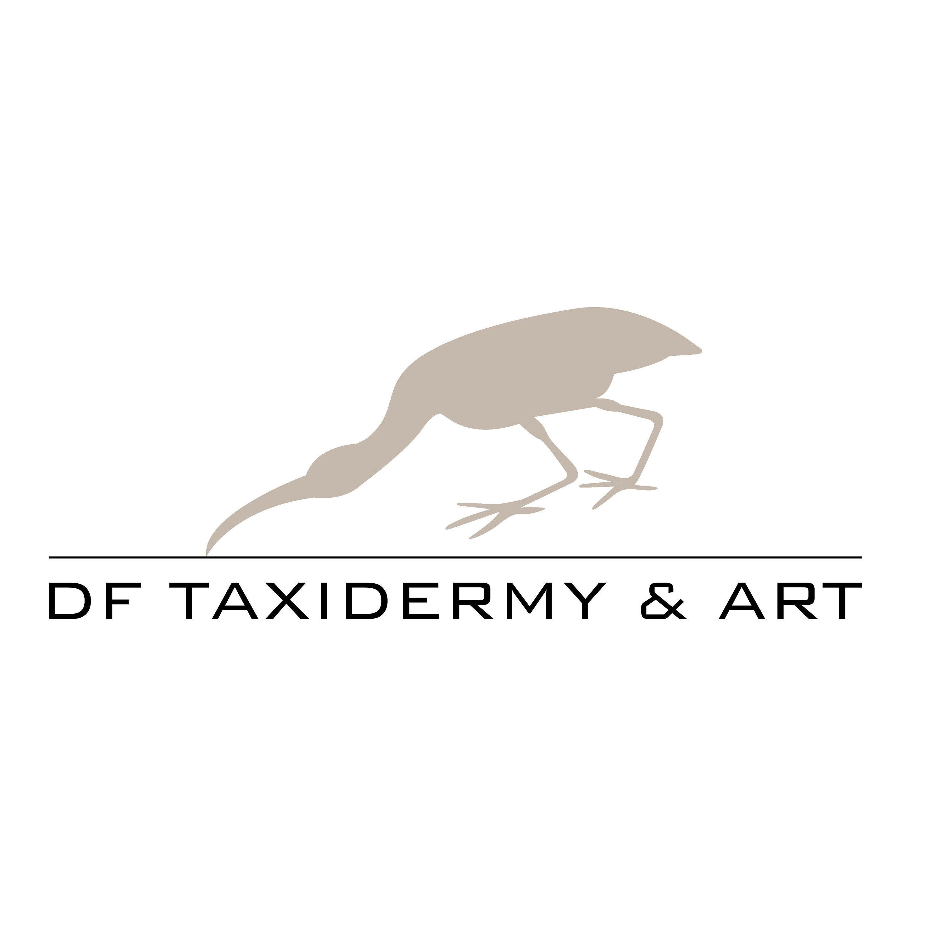 DF TAXIDERMY & ART Bird taxidermy art & by DanielleFrenken