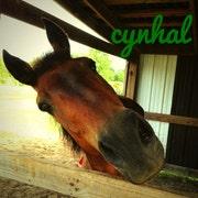 cynhal