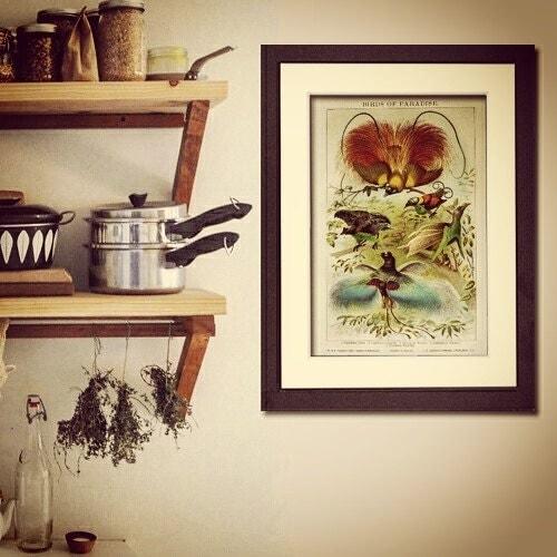 Vintage prints framed art antique prints for by primroseprints