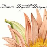 DreamDigitalDesigns