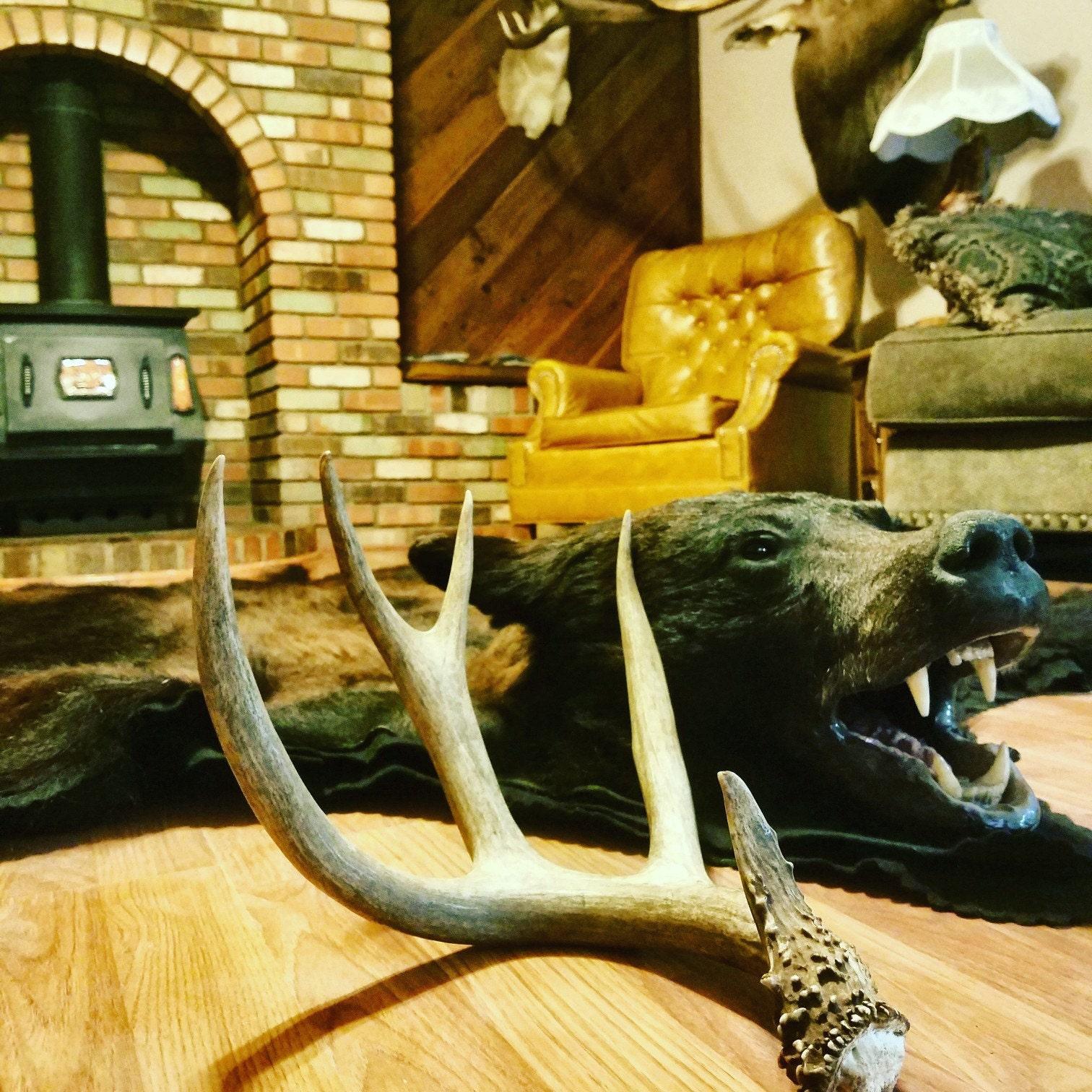 Coues Whitetail Deer Skull European Mount Brown Antlers Wood