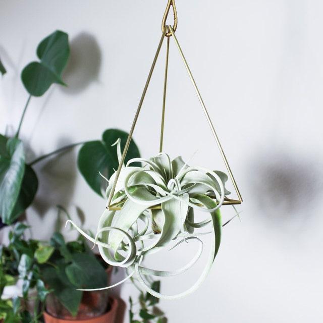 Original Plant-Inspired Pins Mobiles & Wall Sconces von hemleva
